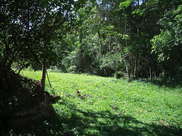 Terreno Código 3409 a Venda no bairro Caldas da Imperatriz na cidade de Santo Amaro da Imperatriz Condominio